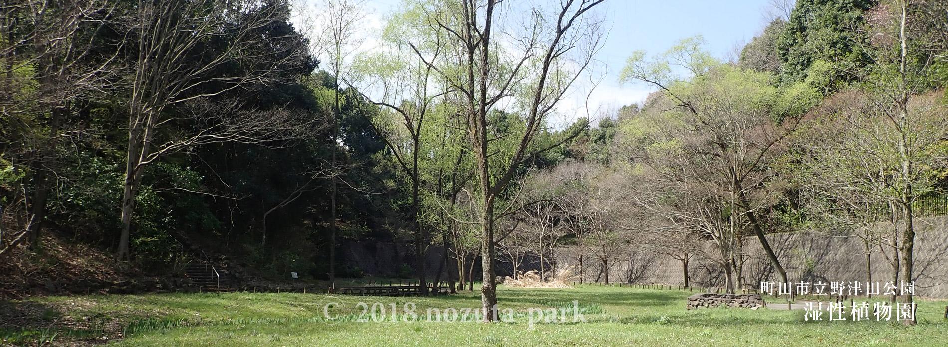 湿生植物園(湿地池)