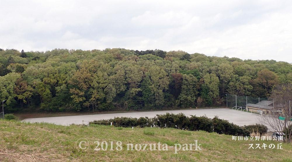 野津田公園 ススキの丘