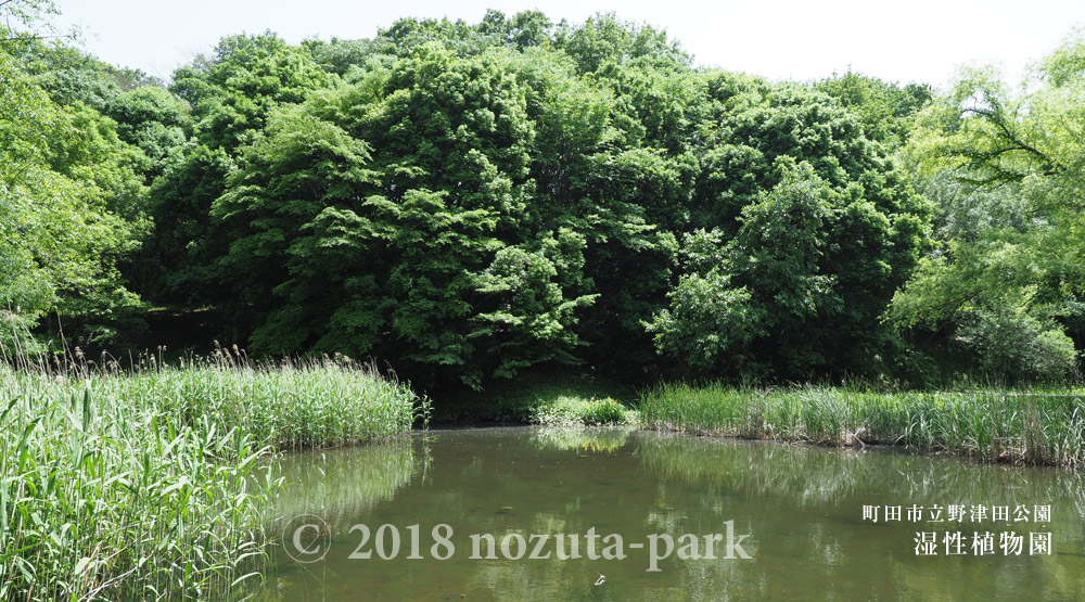 湿生植物園観察日記