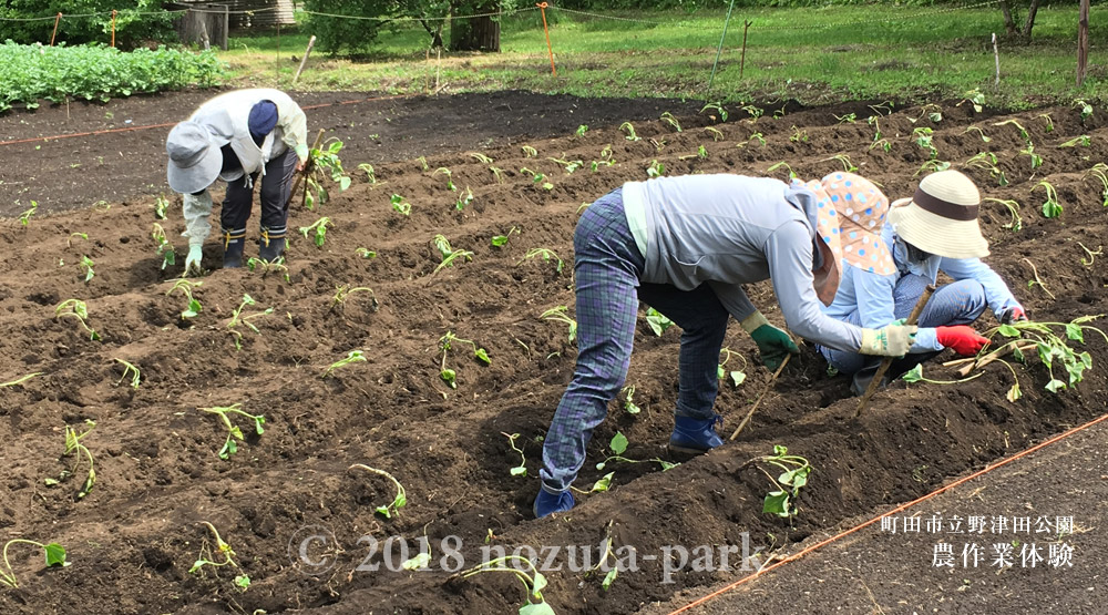 農作業体験プログラム