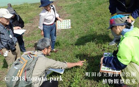 野津田公園 植物観察教室