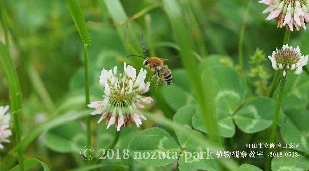 野津田公園昆虫と植物