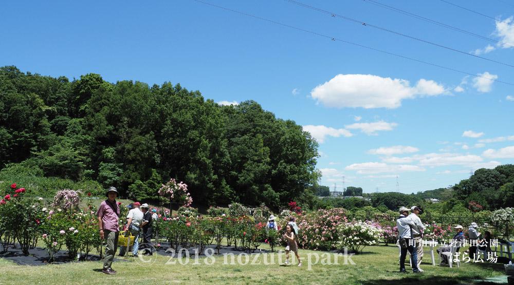 野津田公園ばら広場