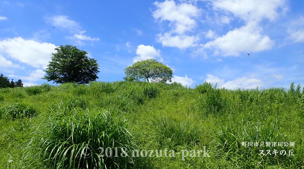 新緑の野津田公園 -園内のご紹介-