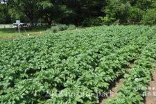 農作業体験のご紹介