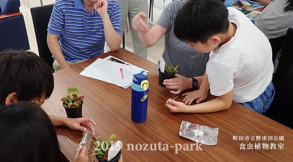 食虫植物教室