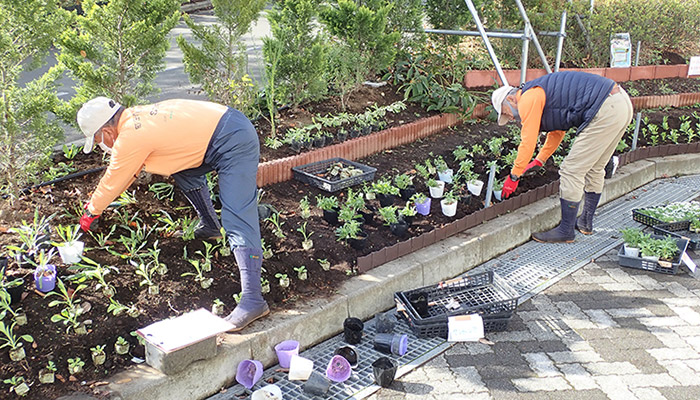 園芸プログラム(花修景)