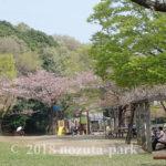 2018野津田公園お花見
