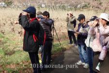 町田市 野鳥観察会