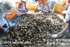 野津田公園農作業プロジェクト